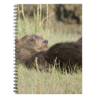 USA. Alaska. Coastal Brown Bear cub at Silver 2 Spiral Notebook