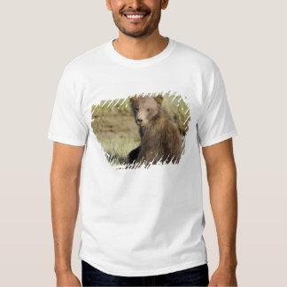 USA. Alaska. Coastal Brown Bear cub at Silver 3 Shirts