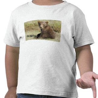 USA. Alaska. Coastal Brown Bear cub at Silver 3 Tshirt