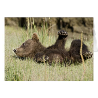 USA. Alaska. Coastal Brown Bear cub at Silver Card