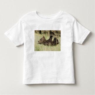 USA. Alaska. Coastal Brown Bear cub at Silver Toddler T-Shirt