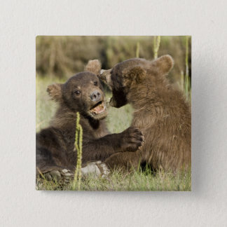 USA. Alaska. Coastal Brown Bear cubs at Silver 15 Cm Square Badge