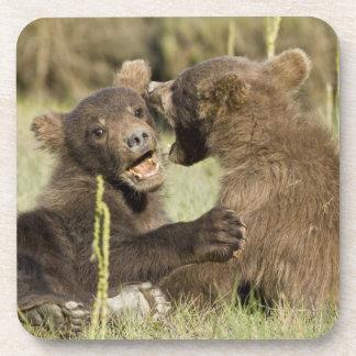 USA. Alaska. Coastal Brown Bear cubs at Silver Coaster