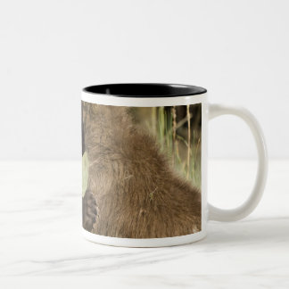 USA. Alaska. Coastal Brown Bear cubs at Silver Two-Tone Coffee Mug