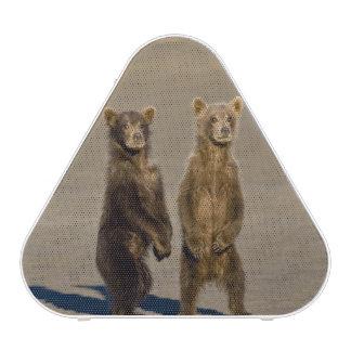 USA. Alaska. Coastal Brown Bear cubs watch their