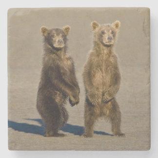 USA. Alaska. Coastal Brown Bear cubs watch their Stone Coaster