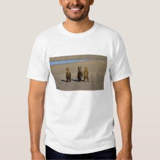 USA. Alaska. Coastal Brown Bear cubs watch their T-shirt