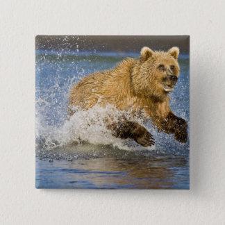 USA. Alaska. Coastal Brown Bear fishing for 2 15 Cm Square Badge