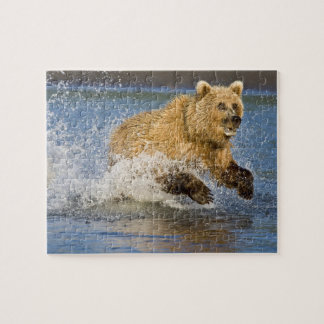 USA. Alaska. Coastal Brown Bear fishing for 2 Jigsaw Puzzle