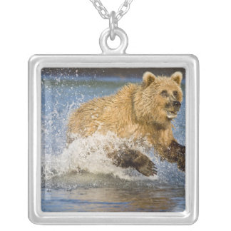 USA. Alaska. Coastal Brown Bear fishing for 2 Silver Plated Necklace