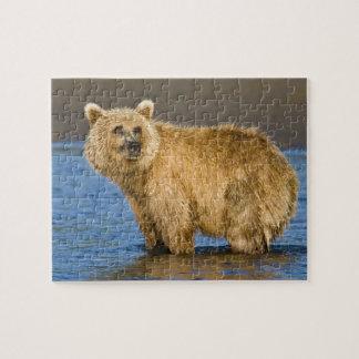 USA. Alaska. Coastal Brown Bear fishing for Jigsaw Puzzle