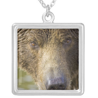 USA. Alaska. Concentration-A coastal brown bear Silver Plated Necklace