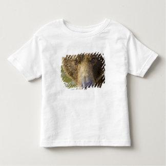 USA. Alaska. Concentration-A coastal brown bear Toddler T-Shirt