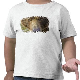 USA. Alaska. Concentration-A coastal brown bear T Shirt