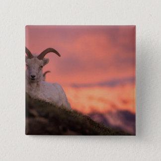 USA, Alaska, Denali National Park, Dall's 15 Cm Square Badge