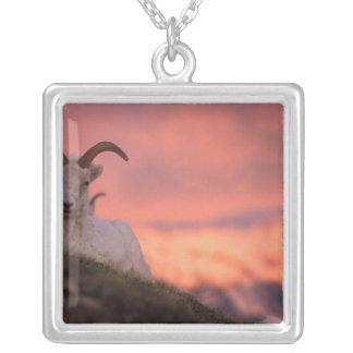 USA, Alaska, Denali National Park, Dall's Silver Plated Necklace