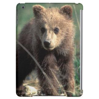 USA, Alaska, Denali National Park, Grizzly