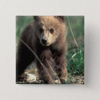 USA, Alaska, Denali National Park, Grizzly 15 Cm Square Badge