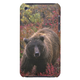 USA, Alaska, Denali National Park. Grizzly bear Barely There iPod Case