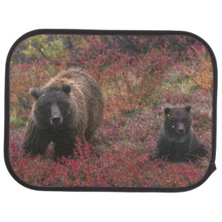 USA, Alaska, Denali National Park. Grizzly bear Car Mat