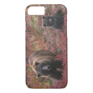 USA, Alaska, Denali National Park. Grizzly bear iPhone 8/7 Case