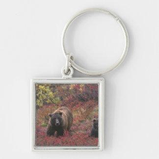 USA, Alaska, Denali National Park. Grizzly bear Keychain