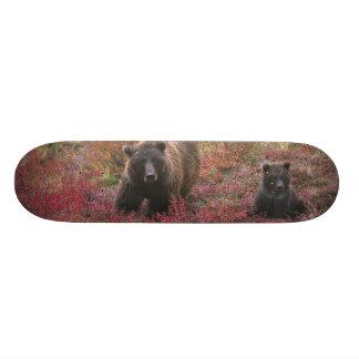 USA, Alaska, Denali National Park. Grizzly bear Skateboard Deck
