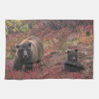 USA, Alaska, Denali National Park. Grizzly bear Tea Towel