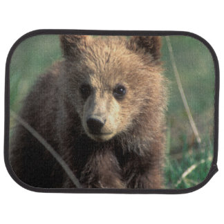 USA, Alaska, Denali National Park, Grizzly Car Mat