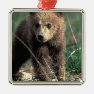 USA, Alaska, Denali National Park, Grizzly Christmas Ornament