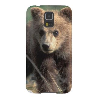 USA, Alaska, Denali National Park, Grizzly Galaxy S5 Case