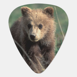 USA, Alaska, Denali National Park, Grizzly Guitar Pick