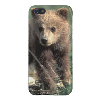 USA, Alaska, Denali National Park, Grizzly iPhone 5/5S Cover