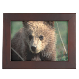 USA, Alaska, Denali National Park, Grizzly Keepsake Box