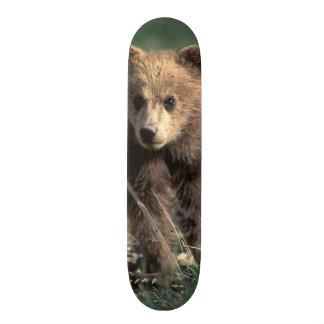 USA, Alaska, Denali National Park, Grizzly Skate Boards