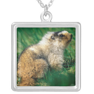 USA, Alaska, Denali National Park, Hoary 2 Silver Plated Necklace