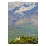 USA, Alaska, Denali National Park, Polychrome Card