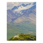 USA, Alaska, Denali National Park, Polychrome Postcard