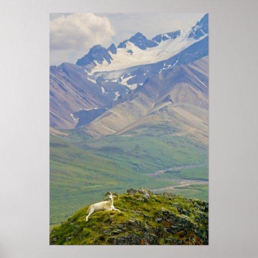 USA, Alaska, Denali National Park, Polychrome Poster