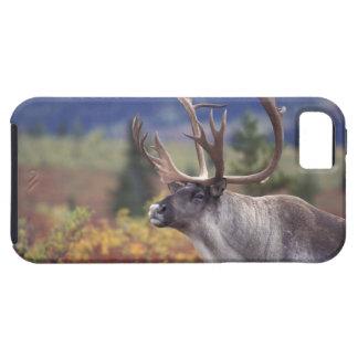 USA, Alaska, Denali NP, Caribou in fall tundra. Case For The iPhone 5