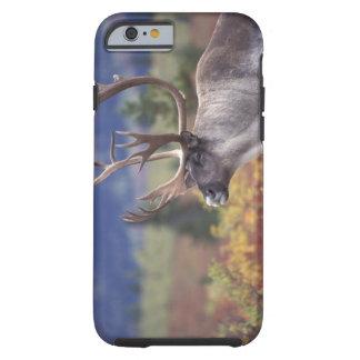 USA, Alaska, Denali NP, Caribou in fall tundra. Tough iPhone 6 Case