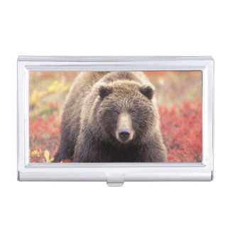 USA, Alaska, Denali NP, female Grizzly Bear Business Card Holder