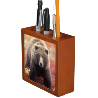 USA, Alaska, Denali NP, female Grizzly Bear Desk Organiser