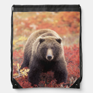 USA, Alaska, Denali NP, female Grizzly Bear Drawstring Bag