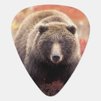 USA, Alaska, Denali NP, female Grizzly Bear Guitar Pick