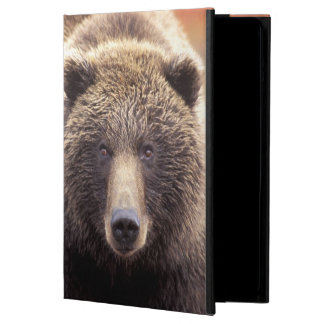 USA, Alaska, Denali NP, female Grizzly Bear iPad Air Case