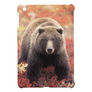 USA, Alaska, Denali NP, female Grizzly Bear iPad Mini Case
