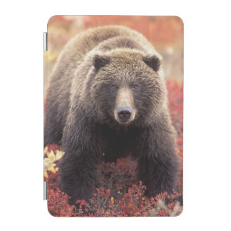 USA, Alaska, Denali NP, female Grizzly Bear iPad Mini Cover