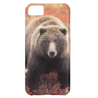 USA, Alaska, Denali NP, female Grizzly Bear iPhone 5C Case