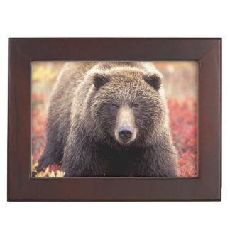 USA, Alaska, Denali NP, female Grizzly Bear Keepsake Box